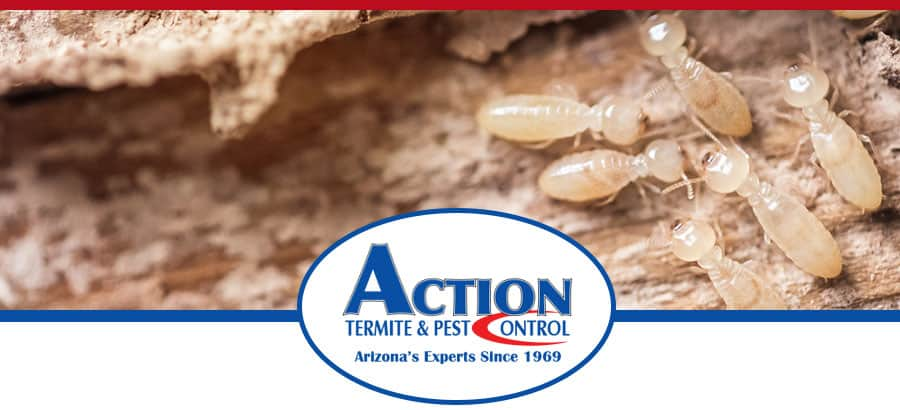 Termite Treatment Phoenix - Termites